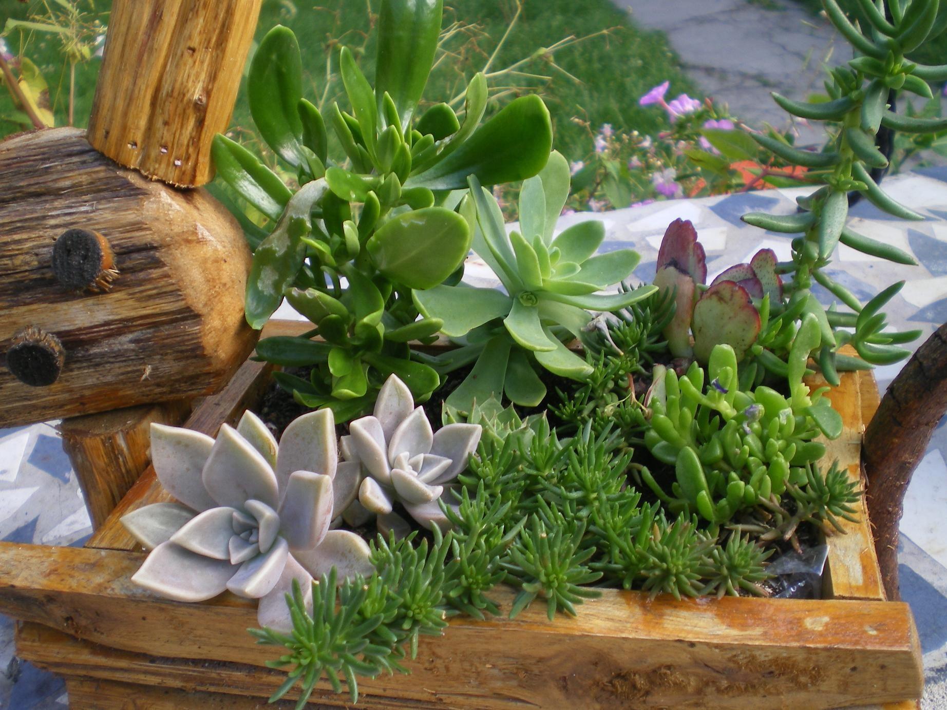 Cactus 17 for Plante grasse exterieur rustique